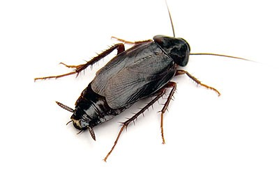 pest control management service in india,pest control management service in gorakhpur, cockroach control service, cockroach management service, Bed bug control service, bed bug management service, wood borer control service in gorakhpur, wood borer management service, mosquito control service, mosquito management service, rodent control service, rodent management service, home care India, pest management service in India, pest control India, home care pest control India,gorakhpur, pest treatment service India, pest treatment service